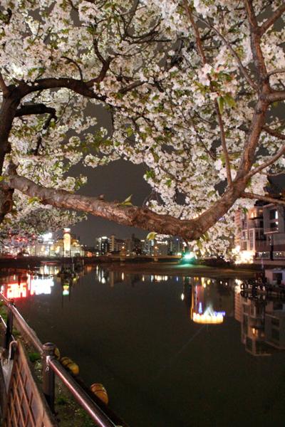 博多の夜桜.JPG